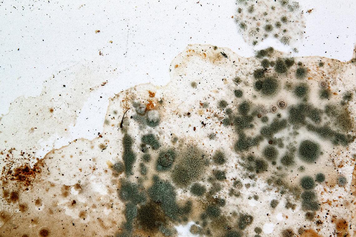 Mofo: Saiba como o Sterilair combate os fungos | Sterilair